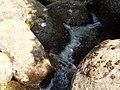 7 Витоша, Златните мостове.JPG