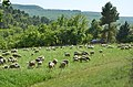 84400 Rustrel, France - panoramio.jpg