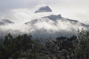 Glass House Mountains National Park - Early morning fog
