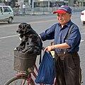 A Dog in a basket.jpg