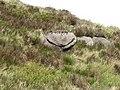 A Slievemoughanmore Smiley - geograph.org.uk - 2434554.jpg