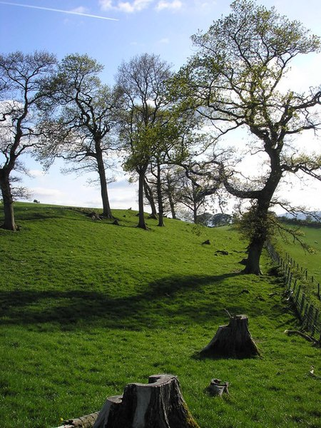 File:A Stand of Ash Trees, Shawburn - geograph.org.uk - 804081.jpg