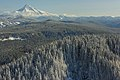 A frosted Mount Hood (49644762176).jpg
