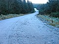 A frosty mountain bike trail in Durris Forest - geograph.org.uk - 636797.jpg
