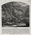 A hare chased by three hunting dogs in a forest. Etching by Wellcome V0021088.jpg