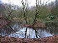A pond in Penn Wood - geograph.org.uk - 103293.jpg