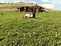 Abandoned village Boloraberd 04.jpg