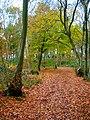 Abbots Wood - geograph.org.uk - 614376.jpg