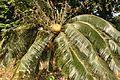 Acharya Jagadish Chandra Bose Indian Botanic Garden - Howrah 2011-01-08 9812.JPG