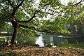 Acharya Jagadish Chandra Bose Indian Botanic Garden - Howrah 2011-01-08 9852.JPG