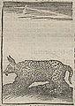 Acosta - 1624 - Historie naturael en morael - UB Radboud Uni Nijmegen - 109862082 204.jpeg