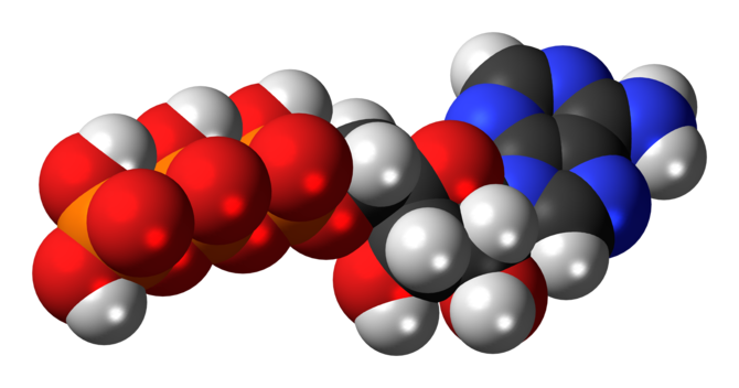 Space-filling model of the adenosine triphosph...