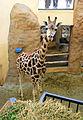 African Savannah house, Zoo Jihlava, stable 2.jpg