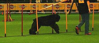 World Dog Show - World Show Agility Trial, 2006