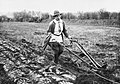 Agriculture in Britain during the First World War Q54607.jpg