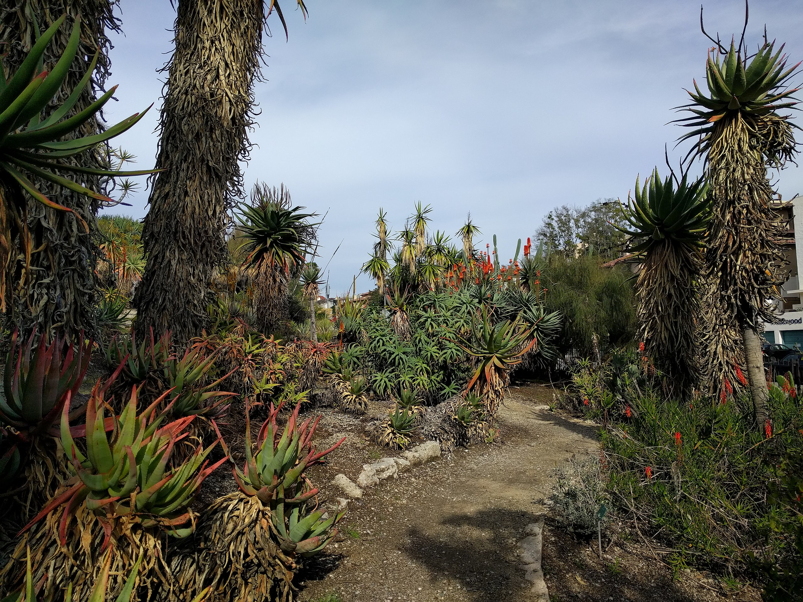 Aloe diversity.jpg