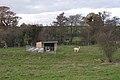 Alpacas, Faerie-Tale farm - geograph.org.uk - 1589410.jpg