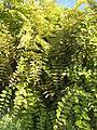 Amin al-Islami Park - Trees and Flowers - Nishapur 012.JPG