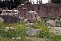 Among the ruins (8063614192).jpg