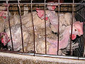 Animal Abuse Battery Cage 01.jpg