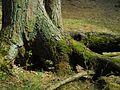 Anniņmuižas Forest.jpg