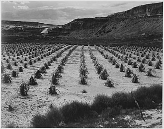 Tuba City, Arizona - Tuba City cornfield, 1941. Photo by Ansel Adams