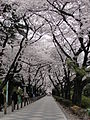 Aoyama-cemetery.jpg