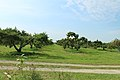 Apple Orchard on Wassem Fruit Farm, Augusta Township, Michigan.JPG
