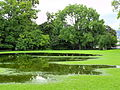 Arboretum - 'Land unter' nach Gewittersturm 2012-07-03 17-43-25 (P7000).JPG