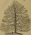 Arboretum et fruticetum Britannicum; or, The trees and shrubs of Britain, native and foreign, hardy and half-hardy, pictorially and botanically delineated, and scientifically and popularly described; (14773453472).jpg
