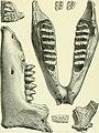 Archives du Mus©um d'histoire naturelle de Lyon (1878) (20138467470).jpg