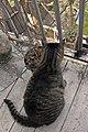 Arnesto 05 2013 - panoramio.jpg