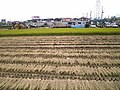 Arrozal em Okazaki - panoramio.jpg