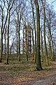 Atzelbergturm001.jpg