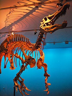 August 1, 2012 - Suchomimus on Display at the Royal Ontario Museum.jpg