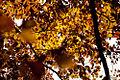 Autumn (5131280245).jpg