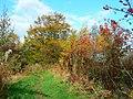 Autumn colours in Balcormo - geograph.org.uk - 1145228.jpg