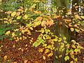 Autumn in forest.JPG