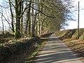 Avenue of Beech trees, north of Otterford - geograph.org.uk - 1187064.jpg