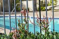 Avenue of the Arts Wyndham Hotel - panoramio.jpg
