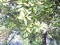 Avranches 2008 PD 15.JPG