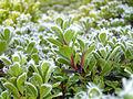 BLM Botany 03 (6871307185).jpg