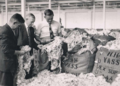 Babe Curran on right at Goulburn Wool Sales, 1 Dec 1954.png