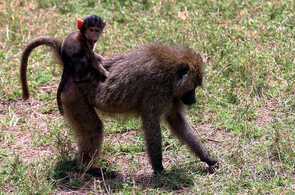 Cheeky Monkey Car Seat Backpack