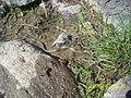 Baby snake - panoramio.jpg