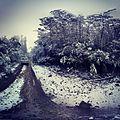 Back roads in Yarra Ranges National Park.jpg