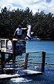 Bahamas 1988 (288) Paradise Island Paradise Lake (23857247520).jpg