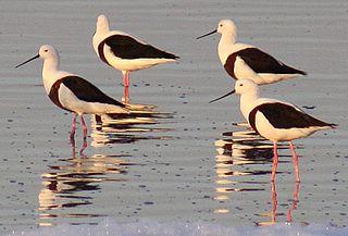 Natimuk-Douglas Wetlands