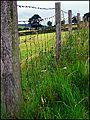 Barbed-wire ^ Meadow-flowers. Nr. Threlkeld. - panoramio.jpg