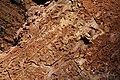 Bark Beetle Evidence, Sierra National Forest 2017 (38181225204).jpg